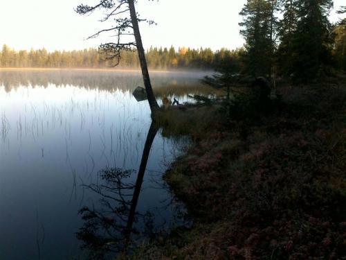 Javaruksen Erä Nalli metsällä taustakuva (Medium)