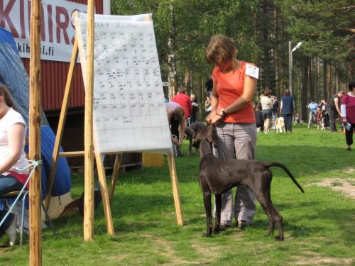 Koirana yttelytunnelmia 14.8.2010 (Medium)